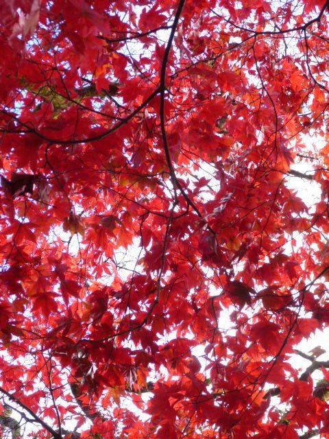 September Gardening Blog