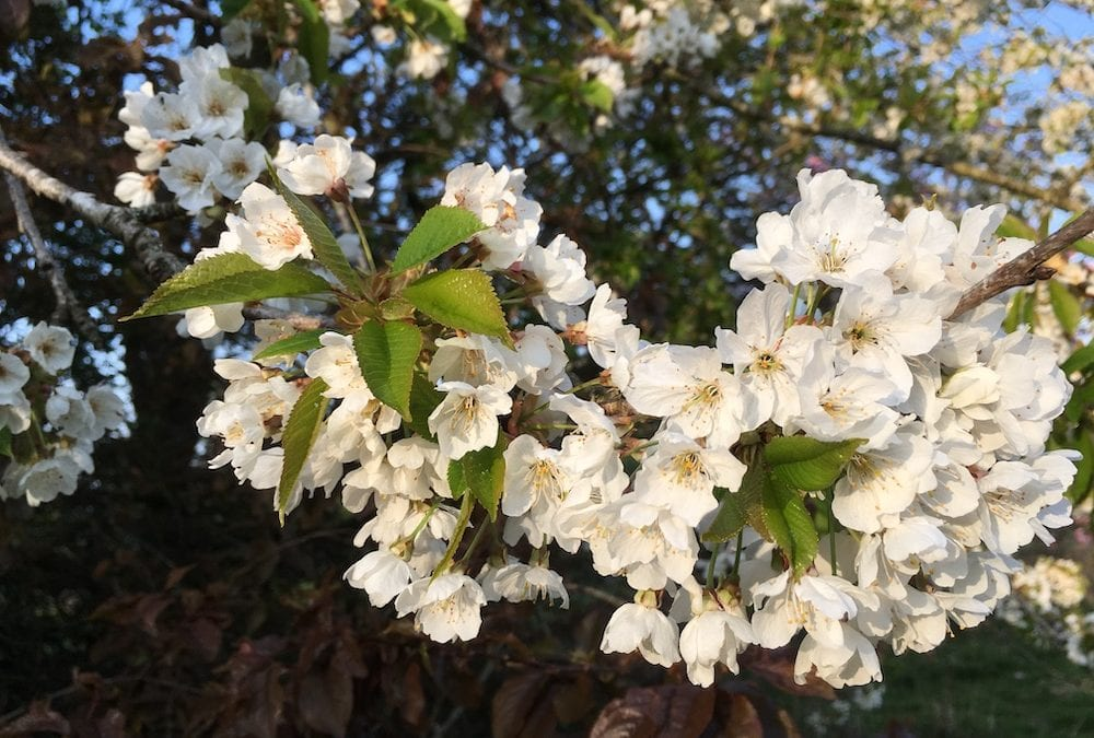 May 'Blossom Time'