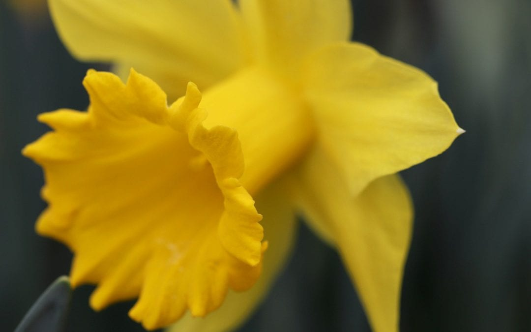 Spring: a time of hope and renewal