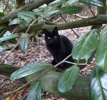 Sad passing of Susie, the Bannockburn House Cat