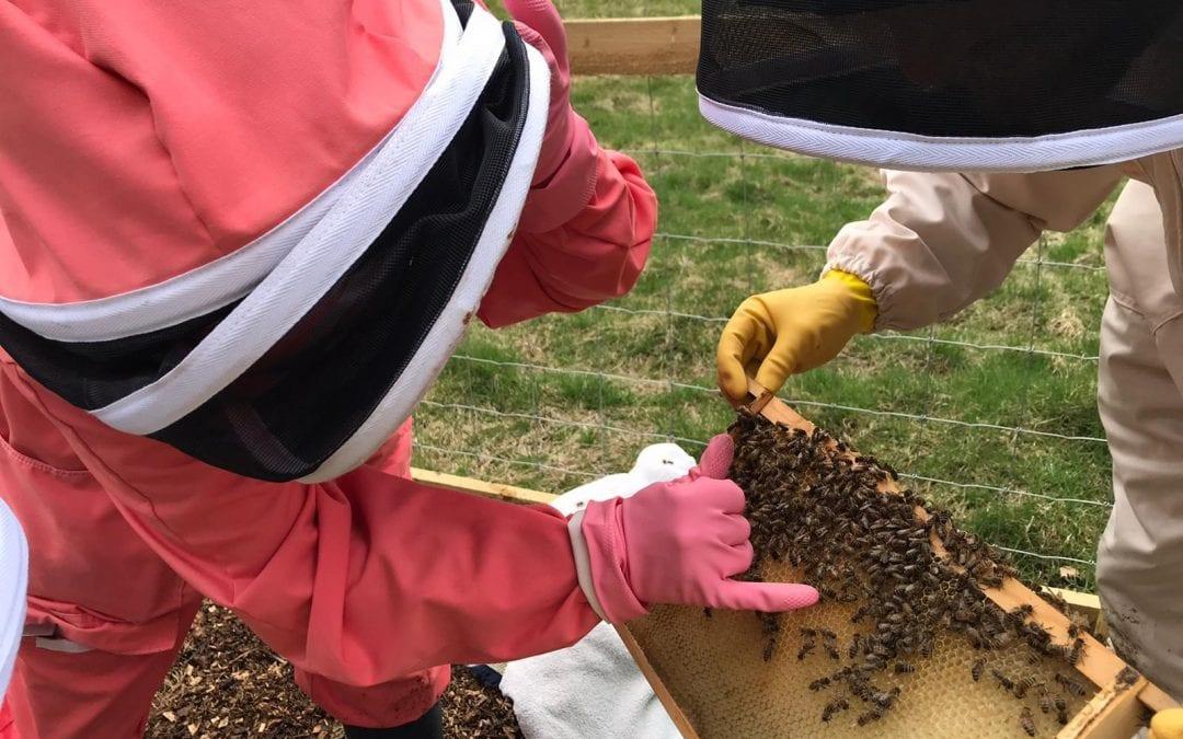 Bannockburn House begins beekeeping journey